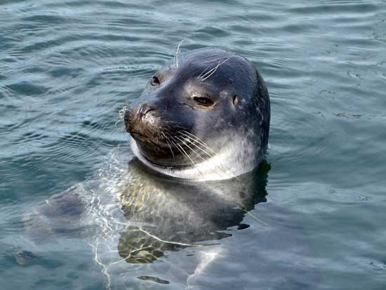 bigotes sesibles de las focas
