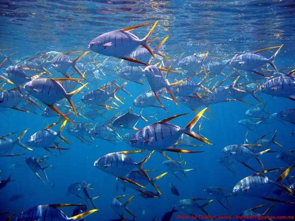 biodiversidad marina en Cabo Pulmo