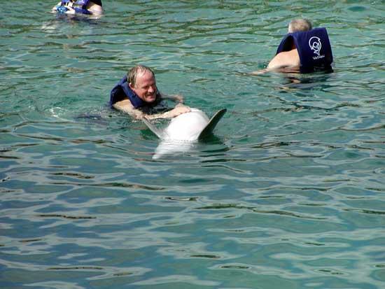 delfiín y comunicación con humanos