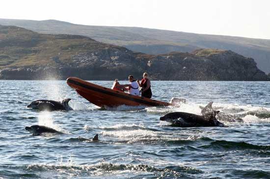delfines nadan tras una zodiac