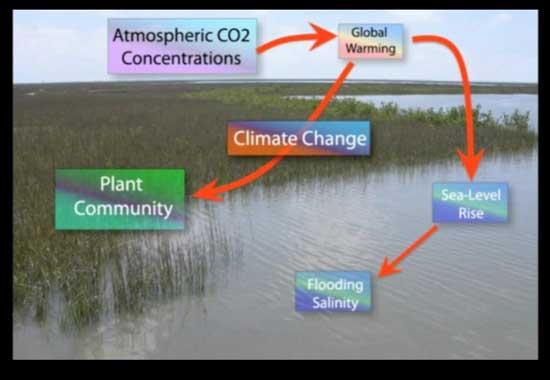 efectos del CO2 en las marismas