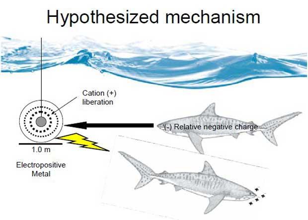 efectos del electrometal positivo en el tiburón
