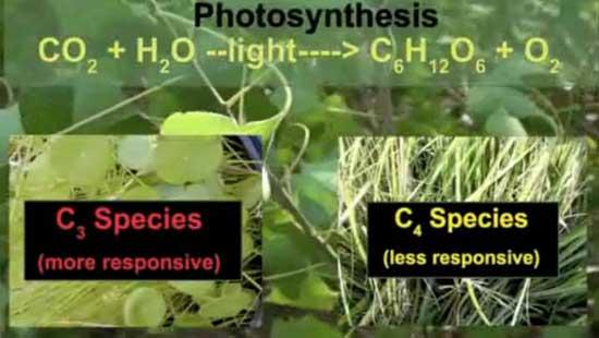 especies c3 y c4