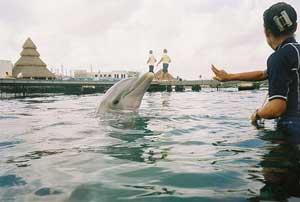 espectáculo con delfines en Indonesia