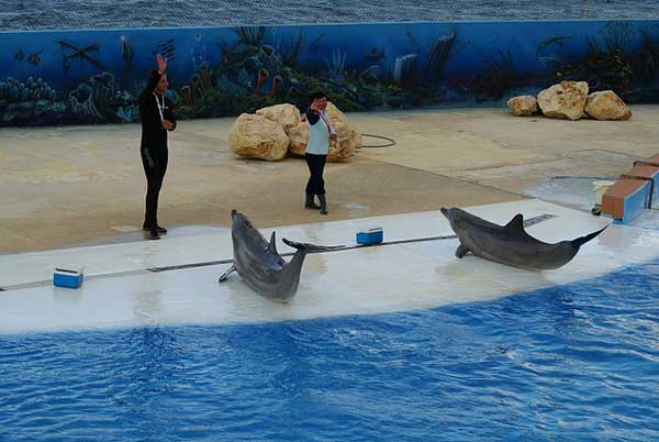 espectáculo con delfines