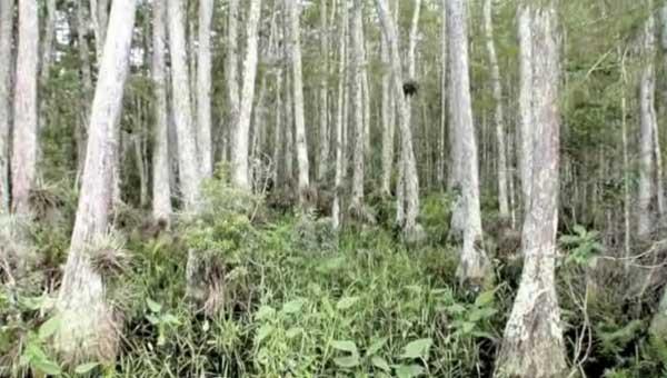manglar