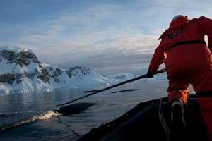 marcado de una ballena para su seguimiento