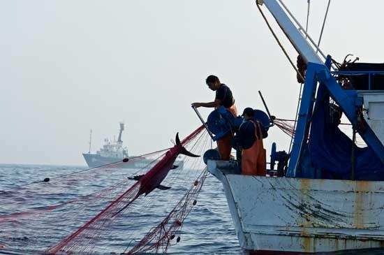 pesca ilegal en el Mar Mediterráneo