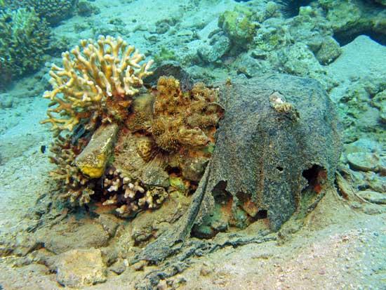 plástico cubre un arrecife de coral