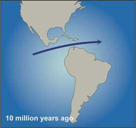 separación en el continente americano hace 10 millones de años