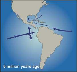 separación en el continente americano hace 5 millones de años