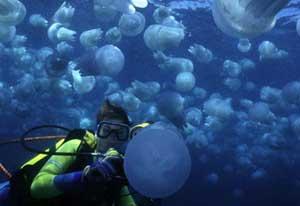 blooom de medusas
