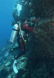 buzo fotografiaando un arrecife de coral