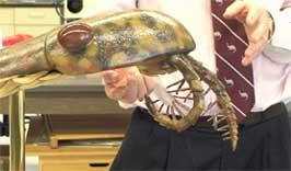 Derek Briggs explicando los fósiles de anomalocarídido