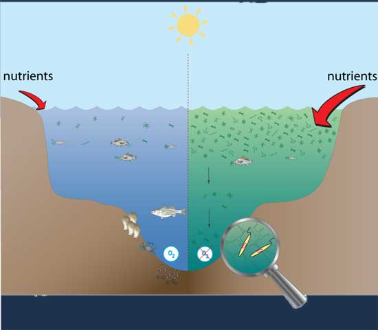 diagrama de una zona muerta marina