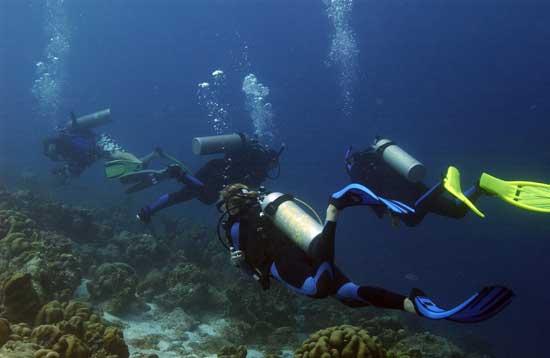 buceadores explorando arrecifes de coral