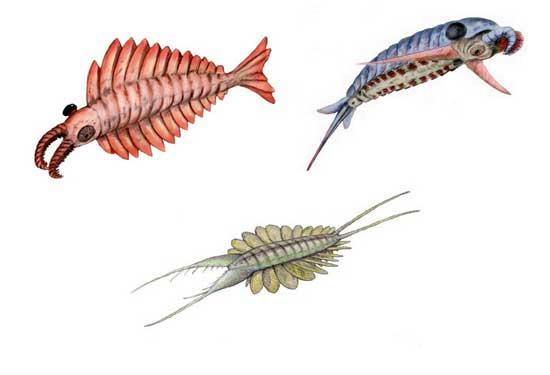 familia Anomalocaridae