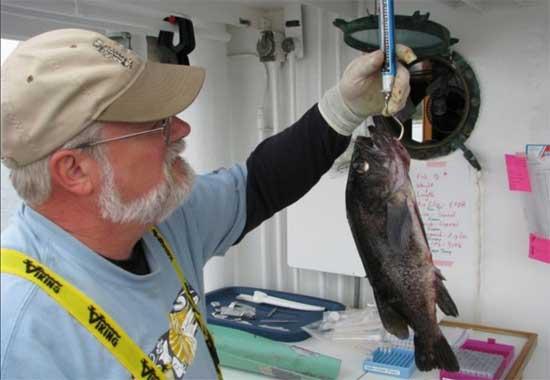 Mike Murray pesa un pez de roca negro