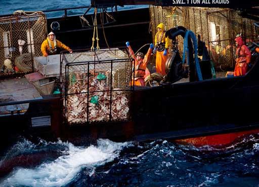 pesca mortal, Discovery channel subiendo trampa de cangrejos