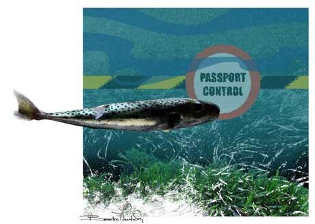 invasión del Mar Mediterráneo por especies exóticas