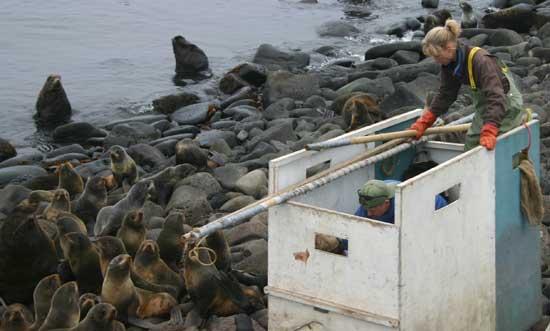 Sara Iverson se prepara para la observación de focas
