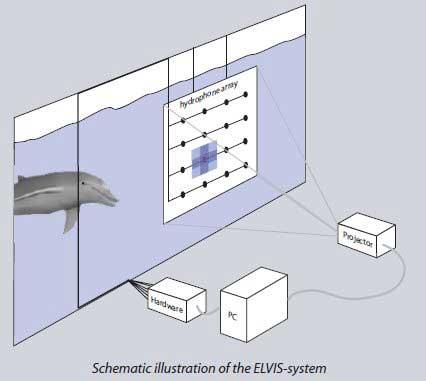 sistema ELVIS ecolocalización