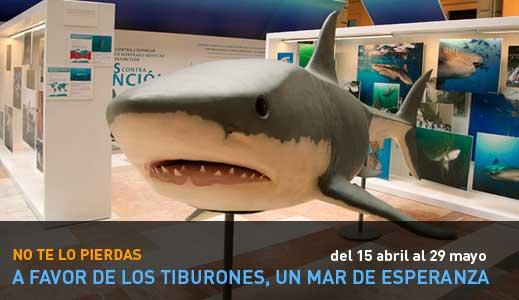 tiburones un mar de esperanza, exposición Sevilla