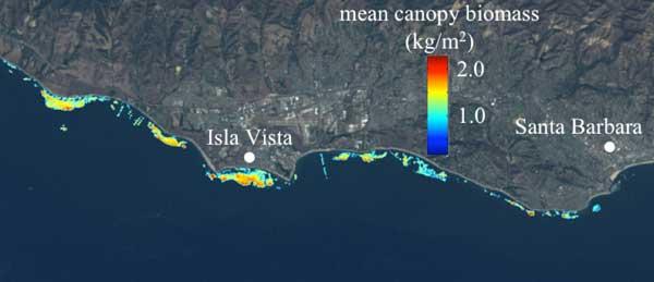 vista desde satélite de algas marinas gigantes en California