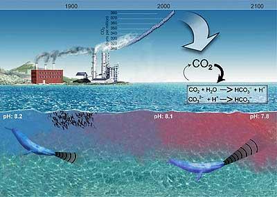 consecuencias de la acidificación sobre las ballenas