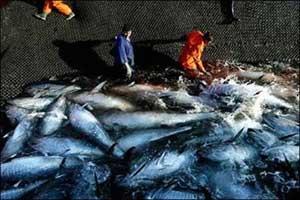 pesca de atún rojo a la almadraba, Zahara de los atunes