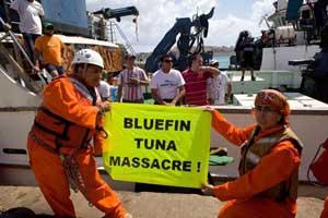 masacre del atún, greenpeace