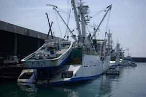 atuneros en puerto