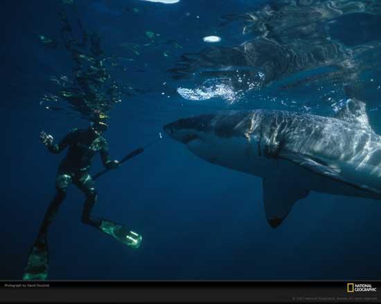 bailando con tiburones