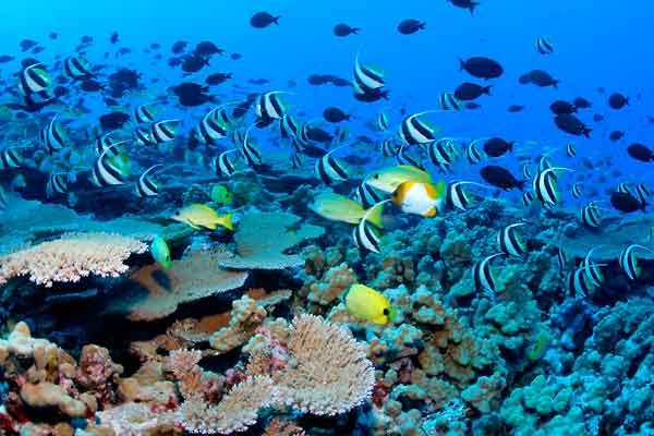 biodiversidad en los arrecifes de coral
