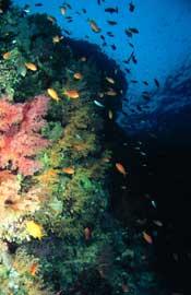 Biodiversidad del mar Cantábrico