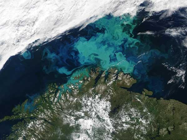 bloom de algas en el mar de Barents