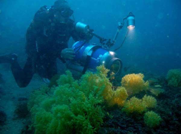 bosque de gorgonias y buzo