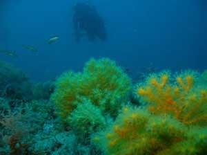 bosque de gorgonias