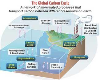 ciclo del carbono en el océano