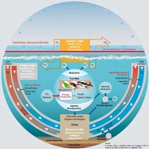 ciclo-carbono-oceanos-mundo.jpg