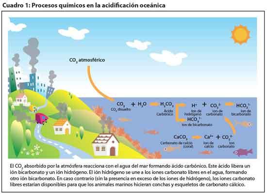 ciclo de C02 en los océanos, acidificación