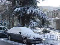coche y pino nevados - Madrid, enero 2010