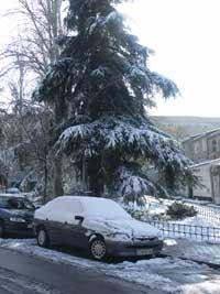 coche y pino nevados Madrid, enero 2010