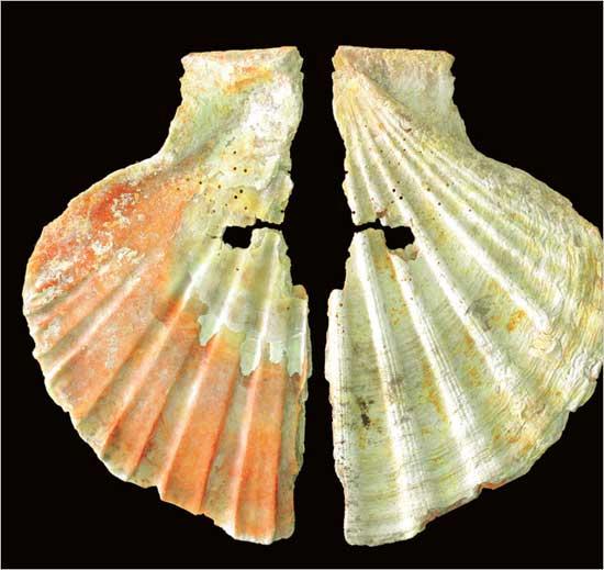 concha marina decorativa de neardentales hace 50.000