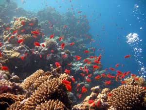 corales y peces rojos