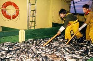 descartes en barcos de pesca