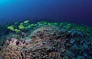 ecositemas de corales