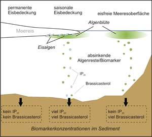 esquema de biomarcadores en el hielo