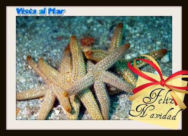 Feliz Navidad desde Vista al Mar