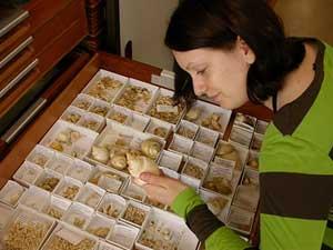 estudio de fósiles marinos